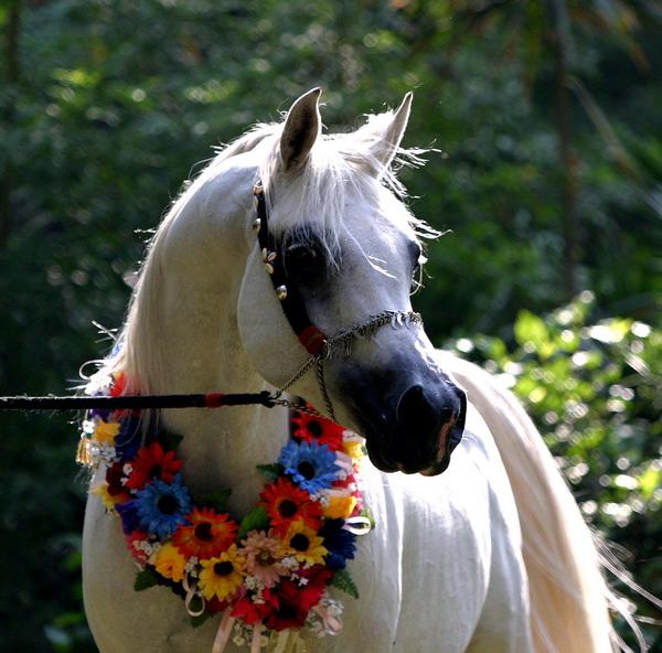 واجب ريفي دافئ ماذا تسمى انثى الحصان Sjvbca Org